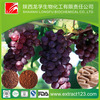 Manufacturer supply high quality organic grape seed extract
