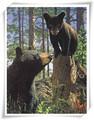 lenticolare immagine 3d di orso figlio con la mamma