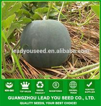 W25 Dayu no.4 deep green hybrid seedless watermelon seeds, yellow inside flesh, 7-8kgs in weight, 12% brix