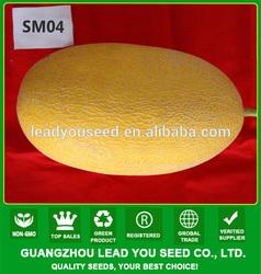 SM04 Ruihong good quality high output hami melon seeds, fruit seeds for sale