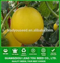 SM26 Agrich f1 hybrid high sugar content sweet melon seeds, hybrid melon seeds