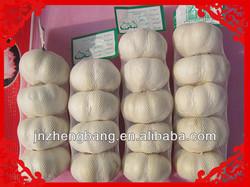 shandong fesh pure white garlic