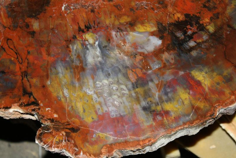 Couchtisch Versteinertes Holz ~ Arizona versteinertes holz Scheiben für die Dekoration oder tisch