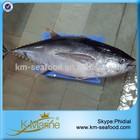 Frozen Fish Yellow Fin Tuna