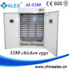 family type 20000 eggs automatic egg incubator used poultry egg incubator AI-5280