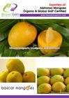 Fresh Mangoes/Alphonso Mangoes/Indian Alphonso Mangoes