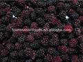 Nova temporada de iqf/congelados cultivar/amora silvestre para exportação