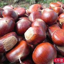 New organic bulk fresh chestnuts