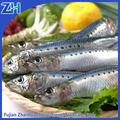 nombre científico para los peces sardinas de embalaje por la bolsa