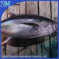 Super congelado fresco atum peixe preço