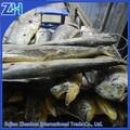 Gros frozen fish seafood 2.gkg+ / 5 kg + mahi mahi toute poisson rond