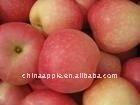 big 2014 NEW fresh gala apple
