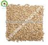 beer materials/malted barley