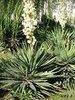 yucca schidigera extract manufactory