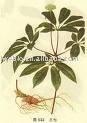 Lycium Extract, Fructus lycii extract, Latin Name: Lycium barbarum L.