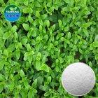 Pure Natural Stevia Leaf Extract /Stevioside, RA