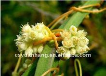 100% nature Cuscutae Seed Extract