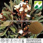 Catuaba Bark Extract 10% Tannins
