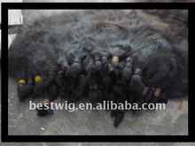 Export success to brazilian virgin human hair raw/hair bulk