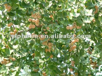 ginkgo extract powder,Ginkgo flavone Glycosides 24%/Terpene Lactones 6%