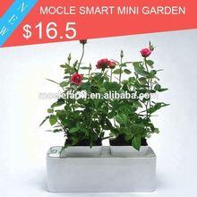 Smart Mini Garden companies want agents in Nepal
