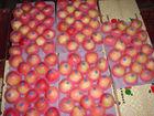 fresh red gala apple