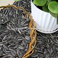 Black sementes de girassol nova safra de forma muito 5009/24/64