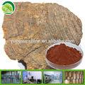 chaga estratto obliquo inonotus estratto