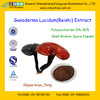 100% Natural Ganoderma Lucidum Extract/Reishi Mushroom Extract Polysaccharides 10%-50% from GMP Factory