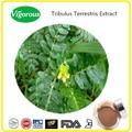 100% natural puro extrato de tribulus terrestris, tribulus terrestris pó do extrato, extrato de tribulus terrestris