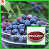 5%-36% Anthocyanidins Blueberry Extract Powder