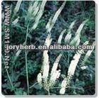 Black Cohosh Powder - plant extract