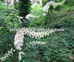 black cohosh root extract