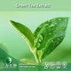 anti-oxidant EGCG polyphenol green tea extract powder