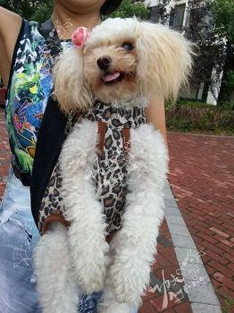 Fashionable leopard stripe Four hole dog bags.pet product