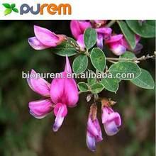 Supply Lespedeza Davurica Extract / Quercetin