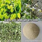 Chinese Herb Medicine for Penis Erection epimedium sagittatum p.e. Icariin