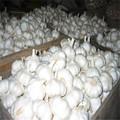 2014 cultivos fresco ajo blanco puro ajo peeld