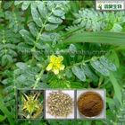 Pure Nature Saponins 40% / 90% / 95% Tribulus Terrestris Extract