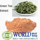 Organic green tea polyphenol anti-cancer , antioxidation extract powder Green Tea Polyphenols 95%
