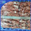 wholesale seafood frozen whole round baby loligo squid/ loligo chinensis sea frozen