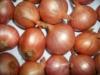 The newset Crop Shallot Onion