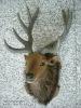 straw deer head handicrafts