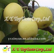 2014 Crop Juicy Fresh Nashi Pear