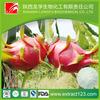 dragon fruit p.e.