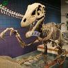 2012 deinonychus dinosaur skeleton replica for indoor exhibition