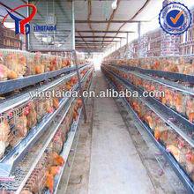 breeder hens