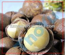 macadamia Pine Nut Shelling/Sheller/Processing Machine SMS:0086-15238398301