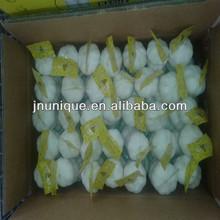 Hot sale 2013 Chinese garlic with 5.5cm diameter