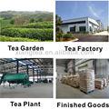 Fabricantes de chá especializada na exportação de chá fornecer todos os tipos de chá chinês